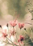 Fleurs de paon Image libre de droits