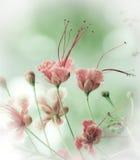 Fleurs de paon Photo libre de droits