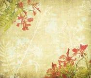 Fleurs de paon sur l'arbre avec le vieux papier antique de vintage Photo stock