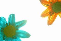 Fleurs de papier Photos stock