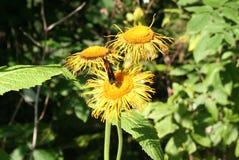 Fleurs de papillon et de forêt Photos stock