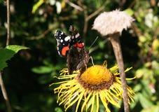 Fleurs de papillon et de forêt Photos libres de droits