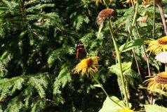 Fleurs de papillon et de forêt Images stock