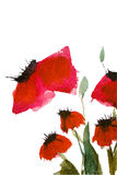 Fleurs de pavot d'aquarelle Images stock