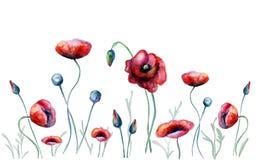 Fleurs de pavot d'aquarelle Images libres de droits