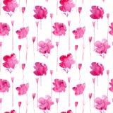 Fleurs de pavot des taches aqueuses illustration libre de droits