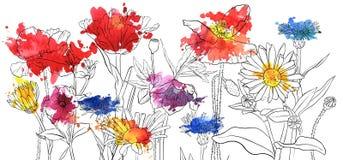 Fleurs de pavot de dessin de vecteur illustration de vecteur