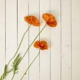 Fleurs de pavot sur un fond en bois Photos stock