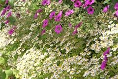 Fleurs de pays d'été Photographie stock libre de droits