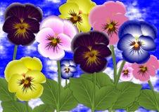 Fleurs de pensée Photos libres de droits