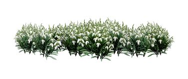 fleurs de perce-neige du rendu 3D sur le blanc images stock