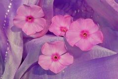 Fleurs de Phlox sur la soie Photo stock
