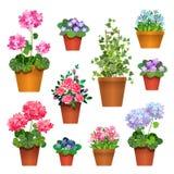 Fleurs de pièce Photos stock