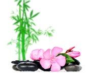 Fleurs de pierres Photo libre de droits