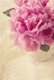 Fleurs de pivoine Photographie stock