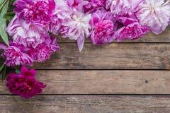 Fleurs 02 de pivoine Photos stock