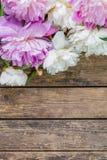 Fleurs 03 de pivoine Photo stock