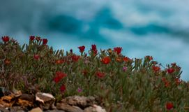 Fleurs de plage Photos stock