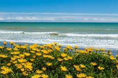 Fleurs de plage Photo libre de droits