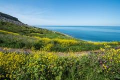 Fleurs de plage de Chesil photos libres de droits