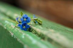 Fleurs de plan rapproché de myosotis Photo libre de droits
