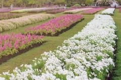 Fleurs de plantations avec la beauté Image libre de droits
