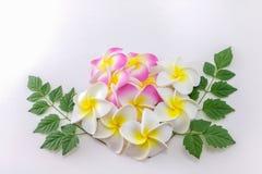 Fleurs de Plumeria Photo libre de droits