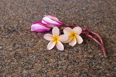 Fleurs de Plumeria sur la pierre de granit photo libre de droits