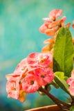 Fleurs de POI Si-ngan Images libres de droits