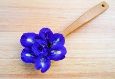 Fleurs de pois images stock