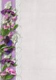 Fleurs de pois doux sur le beau fond Photo stock
