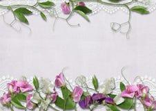 Fleurs de pois doux sur le joli fond Photos stock