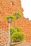 Fleurs de Portulaca Image libre de droits