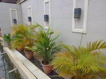 Fleurs de pot sur le balcon Image libre de droits