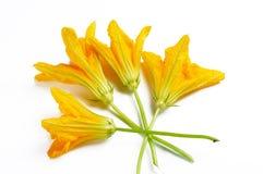 Fleurs de potiron Photos libres de droits