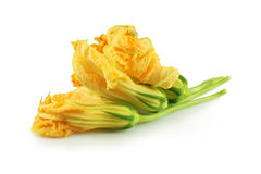 Fleurs de potiron Photo stock