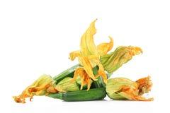 Fleurs de potiron sur le fond blanc Image stock