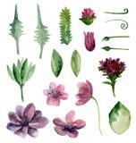 Fleurs de pourpre d'aquarelle Images stock
