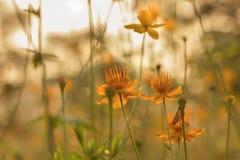 Fleurs de pré à la soirée d'été Photographie stock