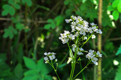 Fleurs de pré Photos stock