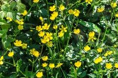 Fleurs de pré Image stock