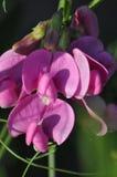 Fleurs de pré images stock