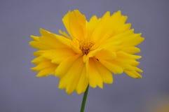 Fleurs de pré Image libre de droits