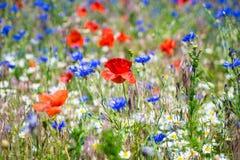 Fleurs de pré, détail Photo libre de droits