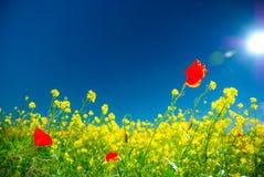 Fleurs de pré d'été Images libres de droits