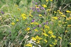 Fleurs de pré d'été Image libre de droits