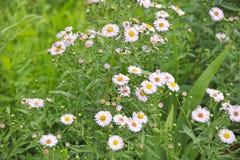 Fleurs de pré d'été Photos libres de droits