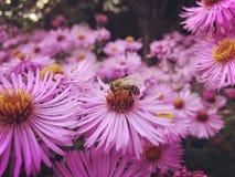 Fleurs de pré d'automne photo stock
