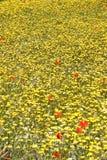 Fleurs de pré de source, Crète photographie stock libre de droits