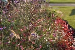 Fleurs de pré en Hyde Park Foyer sélectif photographie stock libre de droits